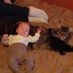 Are Maine Coon Cats Good With Babies And Children?