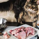 How To Make Good Quality Raw Cat Food For Your Maine Coon