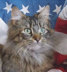 A List Of Maine Coon Breeders In The Us By State Maine Coon Expert