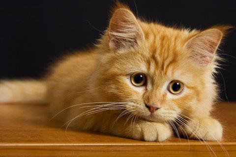 kitten looking sad