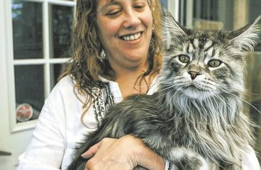 The Maine Coon: The Biggest Domestic Cat In The World