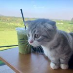 Travelling With A Maine Coon Kitten - A Two Day Road Trip (What I Learned)