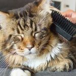 What Are The Best Brushes For Maine Coon Coats?