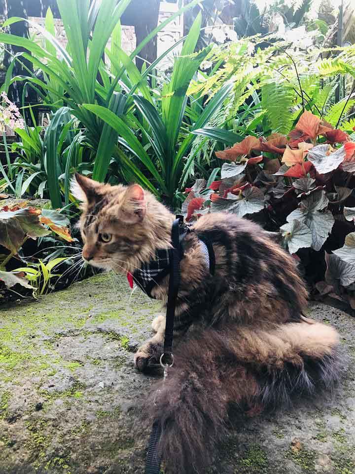 Alita in a botanical garden