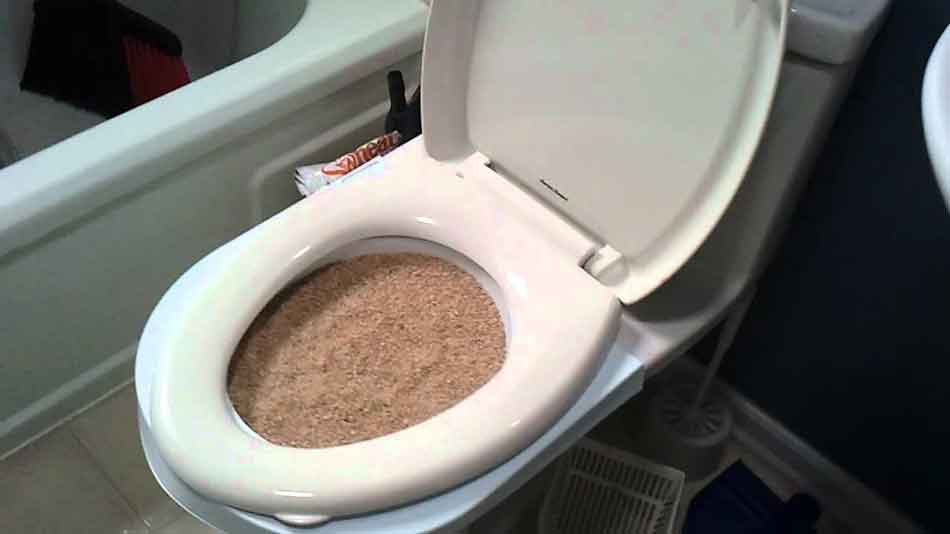 cat litter in a toilet