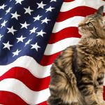 A List Of Maine Coon Adoptions And Rescue Centers In The US