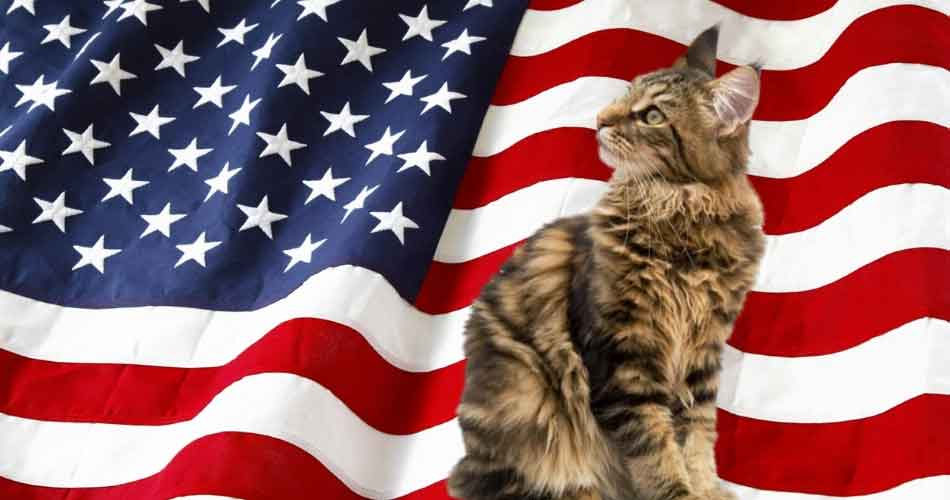 A List Of Maine Coon Breeders In The US By State - Maine