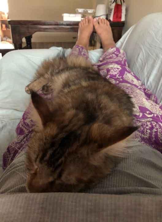 Alita the Maine Coon sleeping on me