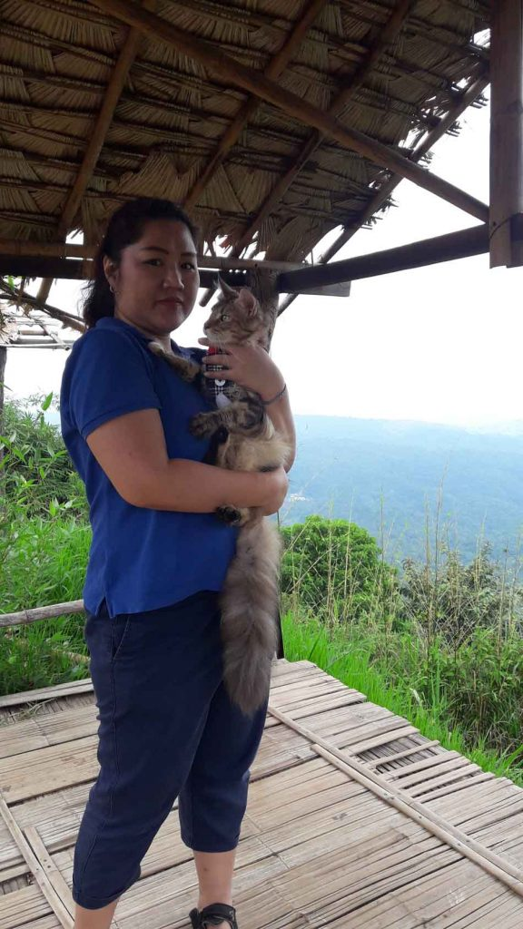 Alita the Maine Coon on a hilltop