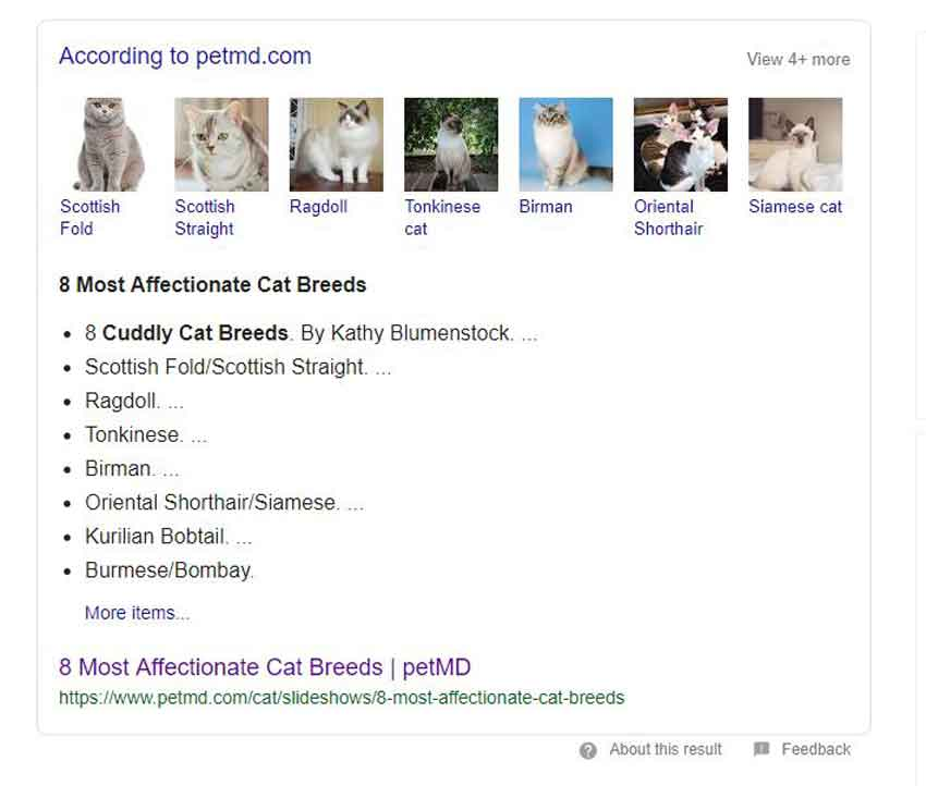 google cuddly cat breed search