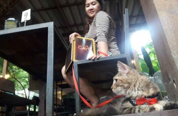 Can You Take Maine Coons For Walks? Oh Yes- Let Me Show You