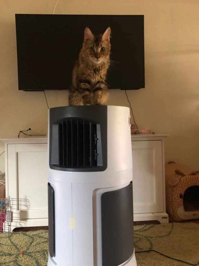 a maine coon sits on top of an air conditioning unit