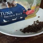 Does Maine Coon Dried Food Expire? What Must You Know