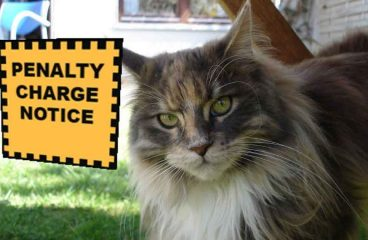 Are Maine Coon Cats Legal?