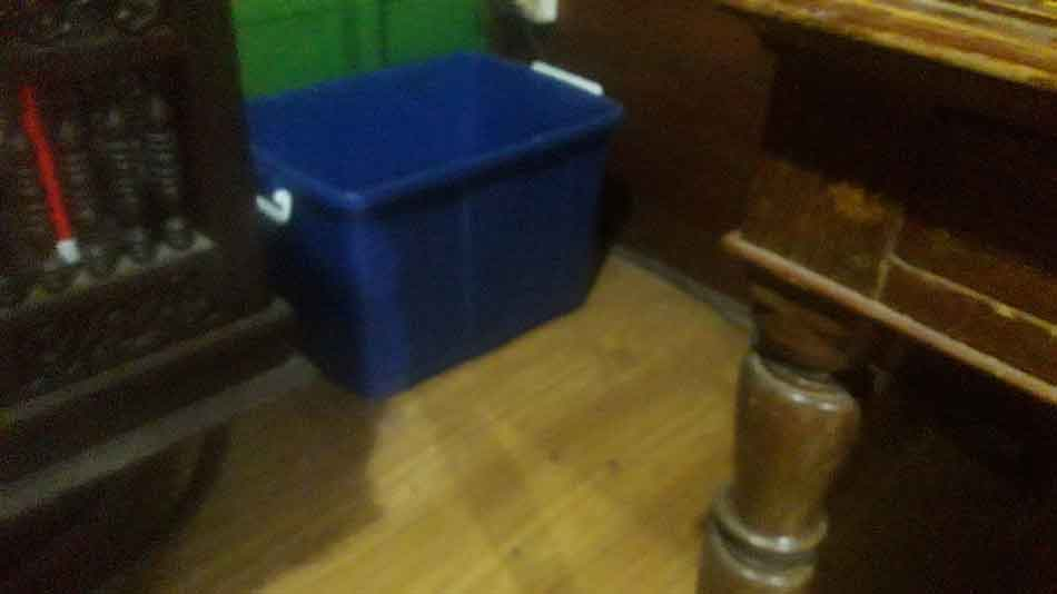 maine coon litter box