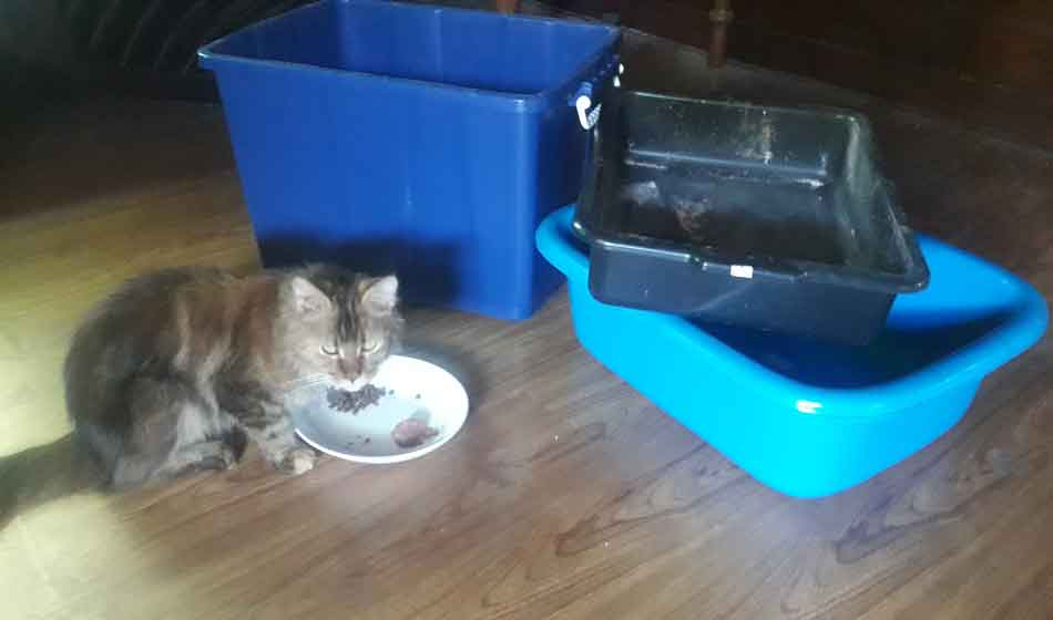 3 Maine Coon litter boxes