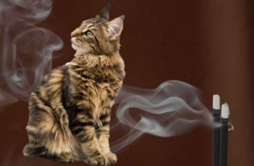 Is Incense Bad For My Maine Coon?
