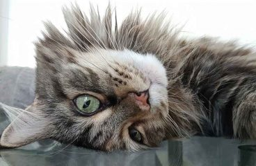 Does An Indoor Maine Coon Need Worming?