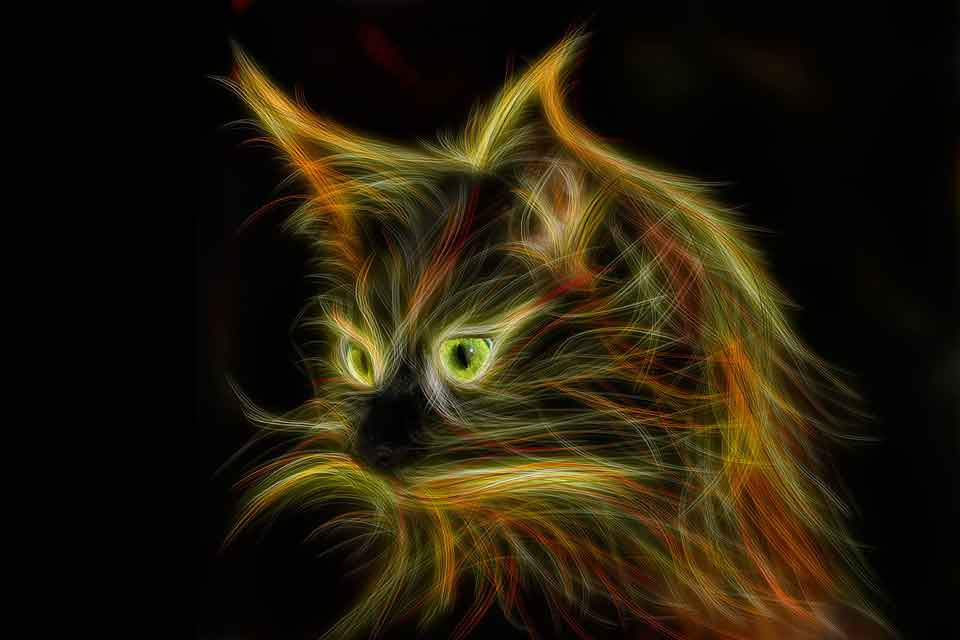 maine coon light painting