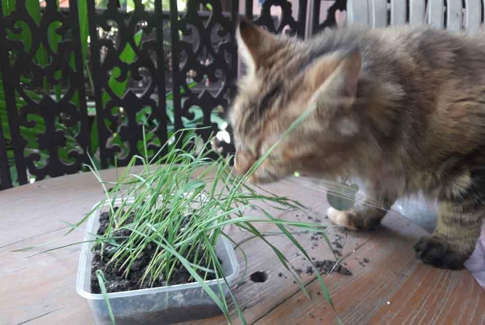 alita chewing cat grass