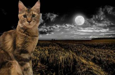 Are Maine Coons Nocturnal? (Will They Let You Sleep)