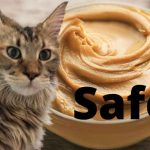 Can Maine Coons Eat Peanut Butter? - Is It Harmful