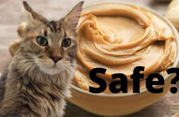 Can Maine Coons Eat Peanut Butter? – Is It Harmful