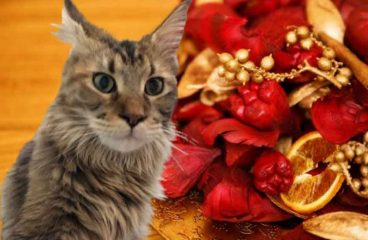 Is Potpourri A Danger To A Maine Coon?