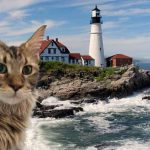 Are Maine Coon Cats From Maine?